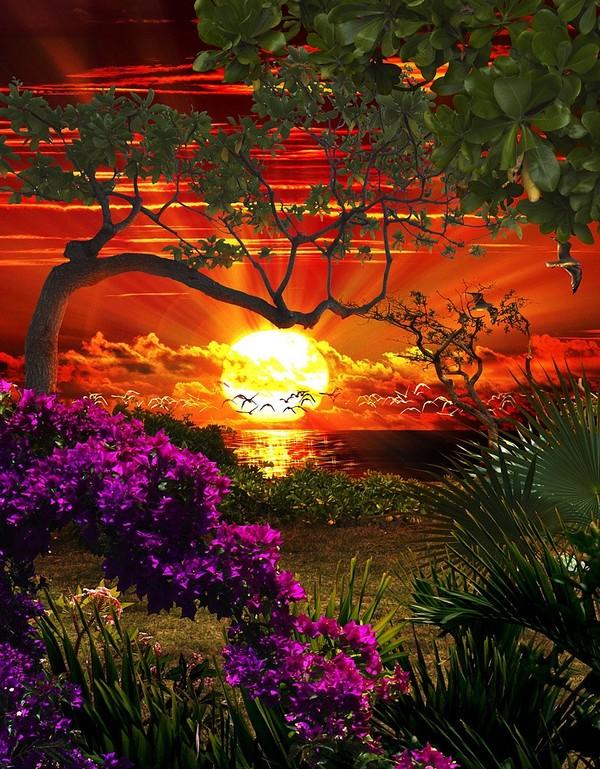 Images coucher de soleil - Page 3 03d57bd2