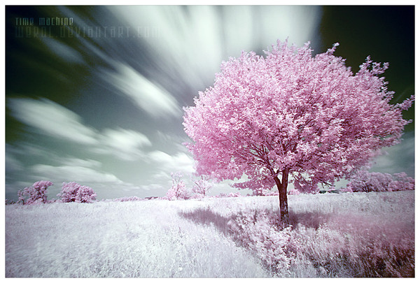 Arbre,tree,scenery