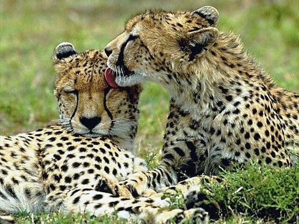 Couple, animaux