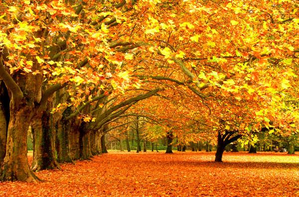 paysage d' automne couleur d' or