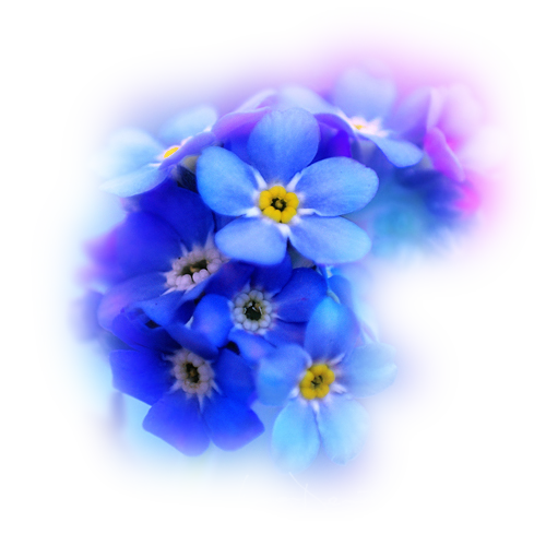fleurs,tube,png