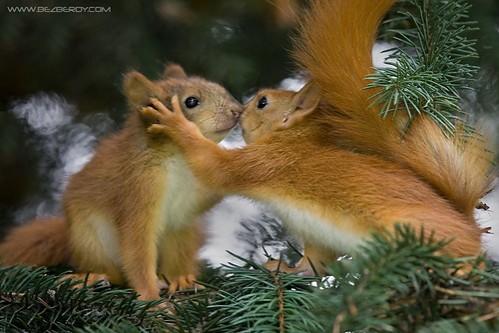 image animaux en couple