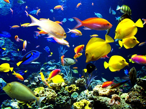 ocean avec poisson