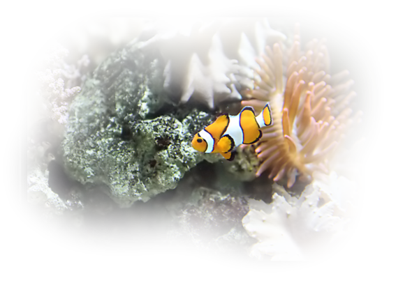 animaux,aquatique,océan,mer,marin,tube