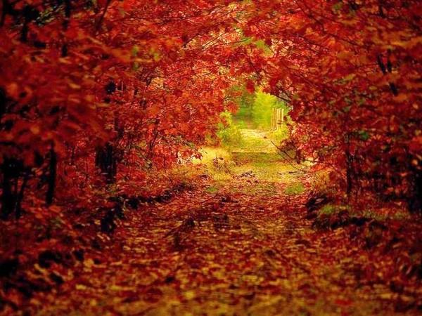 Sous bois d' automne rouge